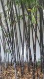 Бамбуковые тростники против белой стены стоковое фото