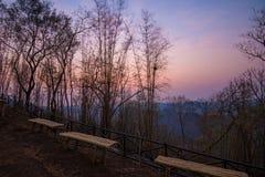 Бамбуковые умершие и рассвет стоковое фото