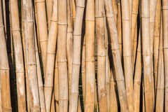 Бамбуковый барьер для волны береговой линии защиты Стоковые Изображения