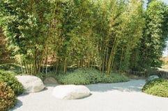 Бамбуковый лес в саде японского стиля Стоковое Изображение