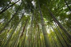 Бамбуковый лес в Ханчжоу, Китае Стоковое фото RF