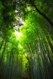 Бамбуковый лес, Киото Стоковое Фото