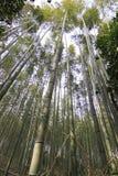 Бамбуковый лес на Киото Японии Стоковое Фото