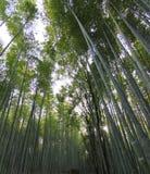 Бамбуковый лес на Киото Японии Стоковые Изображения
