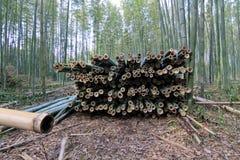 Бамбуковый лес на Киото Японии Стоковые Фото