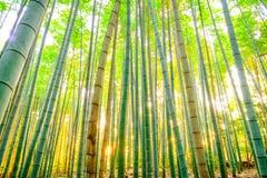 Бамбуковый лес с солнечным в утре Стоковое Изображение RF