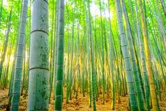 Бамбуковый лес с солнечным в утре Стоковое фото RF