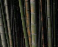 Бамбуковый лес Стоковые Фото