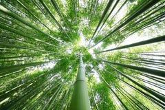 Бамбуковый лес Стоковые Фотографии RF