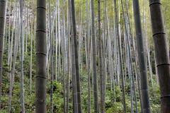 Бамбуковый лес Стоковая Фотография RF