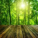 Бамбуковый лес. Стоковая Фотография