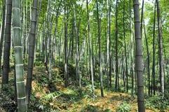 Бамбуковый лес Стоковое фото RF
