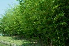 Бамбуковый лес Стоковые Изображения RF
