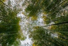 Бамбуковый лес Arashiyama Стоковые Изображения RF