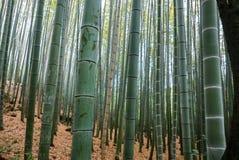 Бамбуковый лес Arashiyama Стоковая Фотография