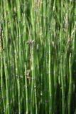 Бамбуковый конец-вверх стоковые фото