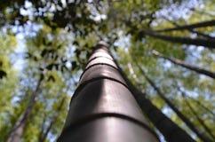 Бамбуковый конец дерева вверх по blured фокусу Стоковые Фотографии RF