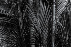 Бамбуковый конец дерева вверх в черно-белом Стоковое фото RF