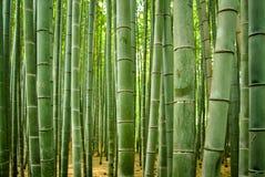 Бамбуковый крупный план леса Стоковое Изображение