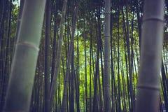 Бамбуковый лес в Китае, предпосылке Стоковая Фотография