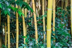 Бамбуковый лес в южных странах стоковое изображение