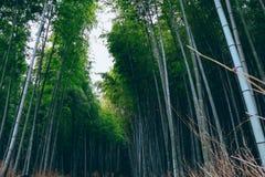 Бамбуковый лес на Arashiyama, Киото, Японии стоковые изображения