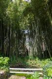 Бамбуковый лес на Ninfa Италии Стоковые Изображения RF