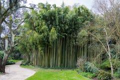 Бамбуковый лес на Ninfa Италии Стоковое фото RF