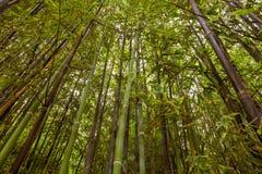 Бамбуковый лес с целью верхней части стоковое фото