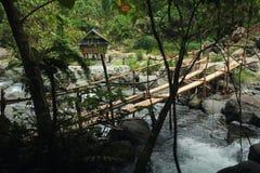 Бамбуковый мост в джунглях Стоковое фото RF