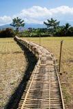 Бамбуковый мост в поле, Nan, Таиланде Стоковые Фото
