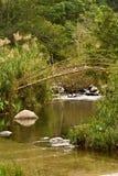 бамбуковый мост Лаос Стоковые Изображения