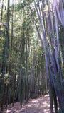 Бамбуковый путь леса Стоковые Фотографии RF