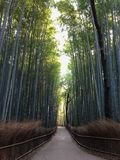 Бамбуковый путь Arashiyama Стоковая Фотография