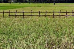 Бамбуковый рельс Стоковые Изображения