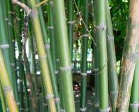 Бамбуковый сад Стоковые Изображения