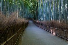 Бамбуковый след леса на Arashiyama Стоковые Изображения RF