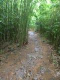 Бамбуковый след леса Стоковое Фото