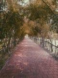 Бамбуковый след Стоковое Изображение RF