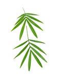 2 бамбуковых листь Стоковое фото RF