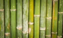 Бамбук, бамбуковая предпосылка Стоковые Изображения RF