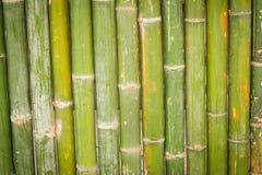 Бамбук, бамбуковая предпосылка Стоковые Фотографии RF