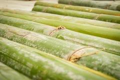 Бамбук, бамбуковая предпосылка Стоковые Изображения
