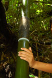 бамбук большой Стоковое фото RF