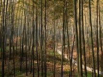 Бамбук весны Стоковые Фотографии RF
