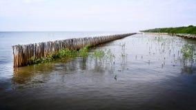 Бамбук вставляет загородку для предохранения от заводов Seashore Стоковое Изображение RF