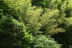 Бамбук в горе Стоковая Фотография