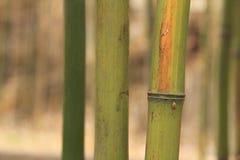 Бамбук в осени Стоковое Изображение RF