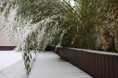 Бамбук в снеге Стоковые Фото