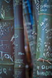 Бамбук граффити Стоковые Изображения